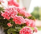 fiori micheletti